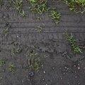 Tyre Tracks 009