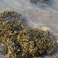 Sea Seaweed 001