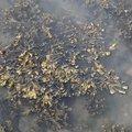 Sea Seaweed 005