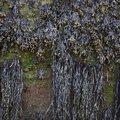 Sea Seaweed 006