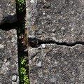 Concrete Damaged 033