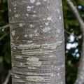 Nature Tree Trunk 033