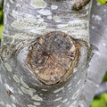 Nature Tree Trunk 034