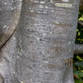 Nature Tree Trunk 035