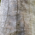 Nature Tree Trunk 038