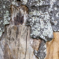 Nature Tree Trunk 040
