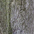 Nature Tree Trunk 042