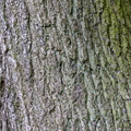 Nature Tree Trunk 043