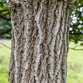Nature Tree Trunk 045