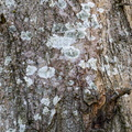 Nature Tree Trunk 047