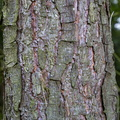 Nature Tree Trunk 050