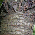 Nature Tree Trunk 053