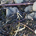Debris Seaside 022