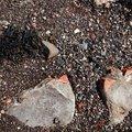 Debris Seaside 025