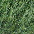 Nature Grass 025