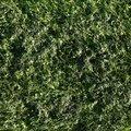 Nature Grass 026