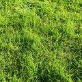 Nature Grass 018