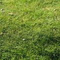 Nature Grass 019