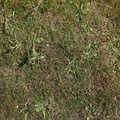 Nature Grass 020