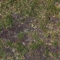 Nature Grass 021