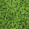 Nature Grass 023