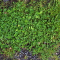 Nature Grass 024