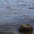 Water Sea 022