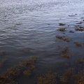 Water Sea 024