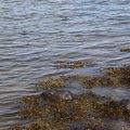 Water Sea 026