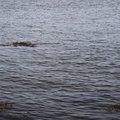 Water Sea 020