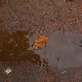 Water Puddle 001