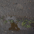 Water Puddle 008