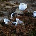 Debris Garbage 014
