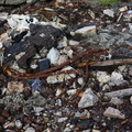 Debris Garbage 003