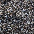 Sea Seashell 022