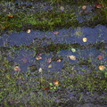 Water Puddle 015