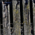 Wood Planks Old 053