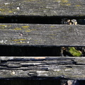 Wood Planks Old 054