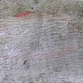 Wood Planks Old 047