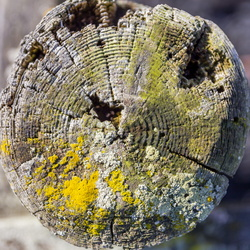 Nature Tree Rings