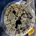 Nature Tree Rings 012