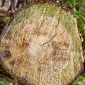 Nature Tree Rings 001