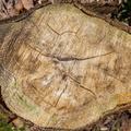 Nature Tree Rings 002