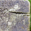 Nature Tree Rings 007