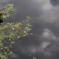 Water Waterfoliage 001