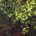 Water Waterfoliage 005