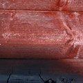 Wood Burned 009