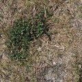 Nature Grass Dry 013