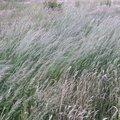 Nature Grass Dry 001