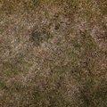 Nature Grass Dry 005